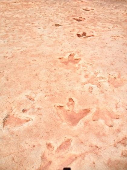 First dinosaur tracks