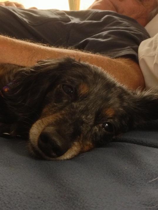 A content pup