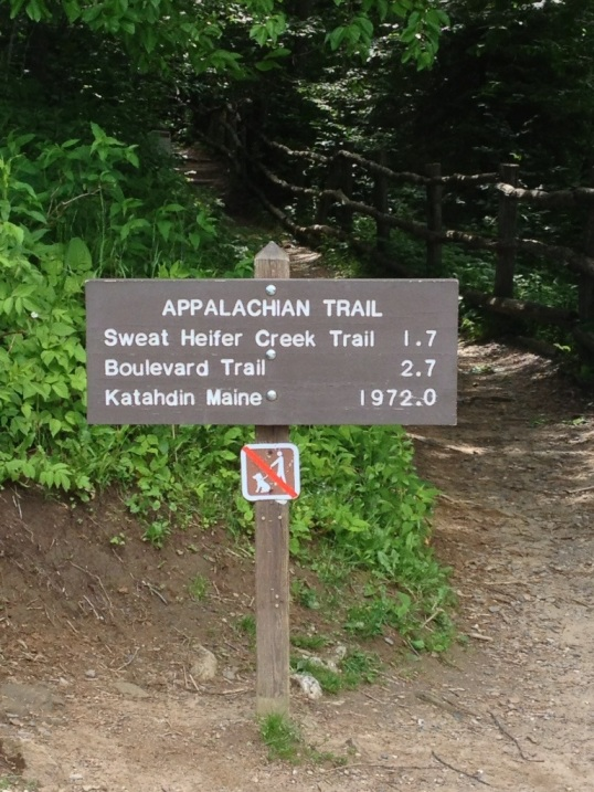 On the Appalachian Trail